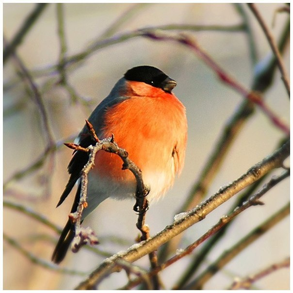 C:\Users\Марина\Desktop\день птиц\iFVBWAM1VoU.jpg