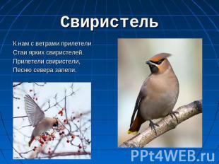 C:\Users\Марина\Desktop\день птиц\img9.jpg