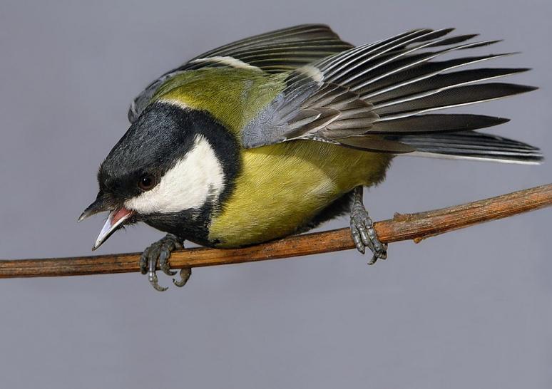 C:\Users\Марина\Desktop\день птиц\2.jpg