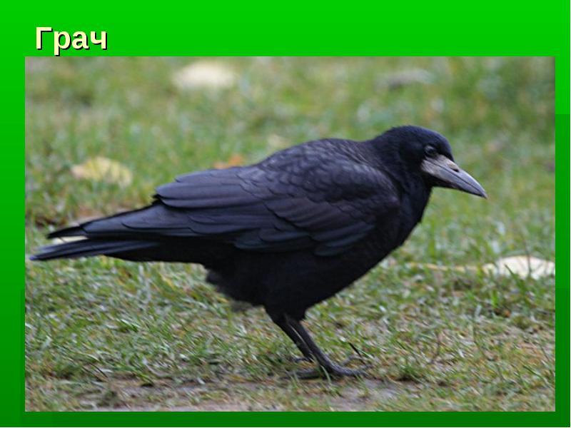 C:\Users\Марина\Desktop\день птиц\img6.jpg