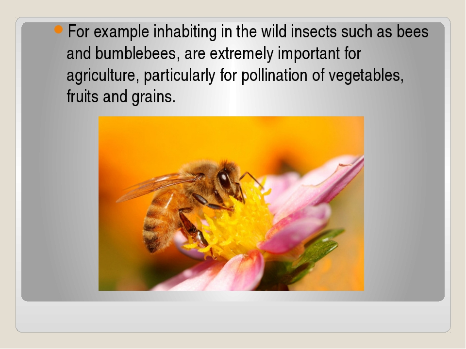 For example inhabiting in the wild insects such as bees and bumblebees, are e...