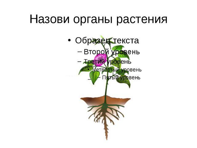 Назови органы растения