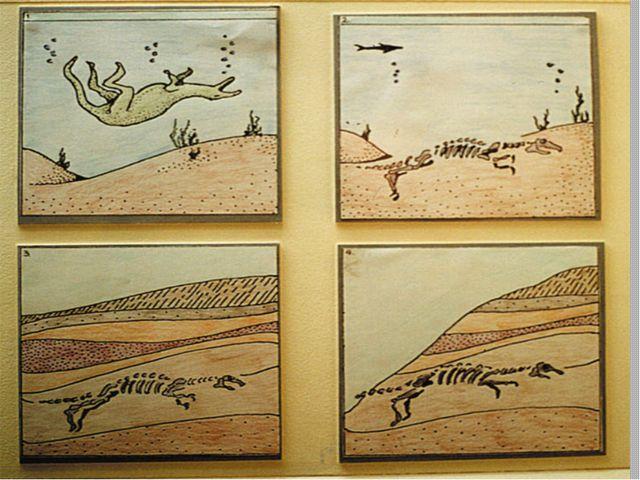 Окаменелости-ископаемые остатки растений и животных прошлых геологических эпо...