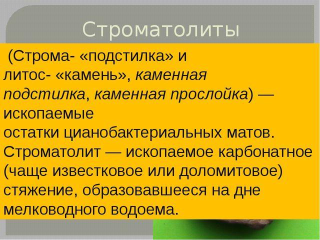 Строматолиты (Строма-«подстилка» и литос-«камень»,каменная подстилка,кам...