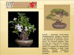 Бонсай – маленькие искусственно сформированные деревья, растущие в декоративн