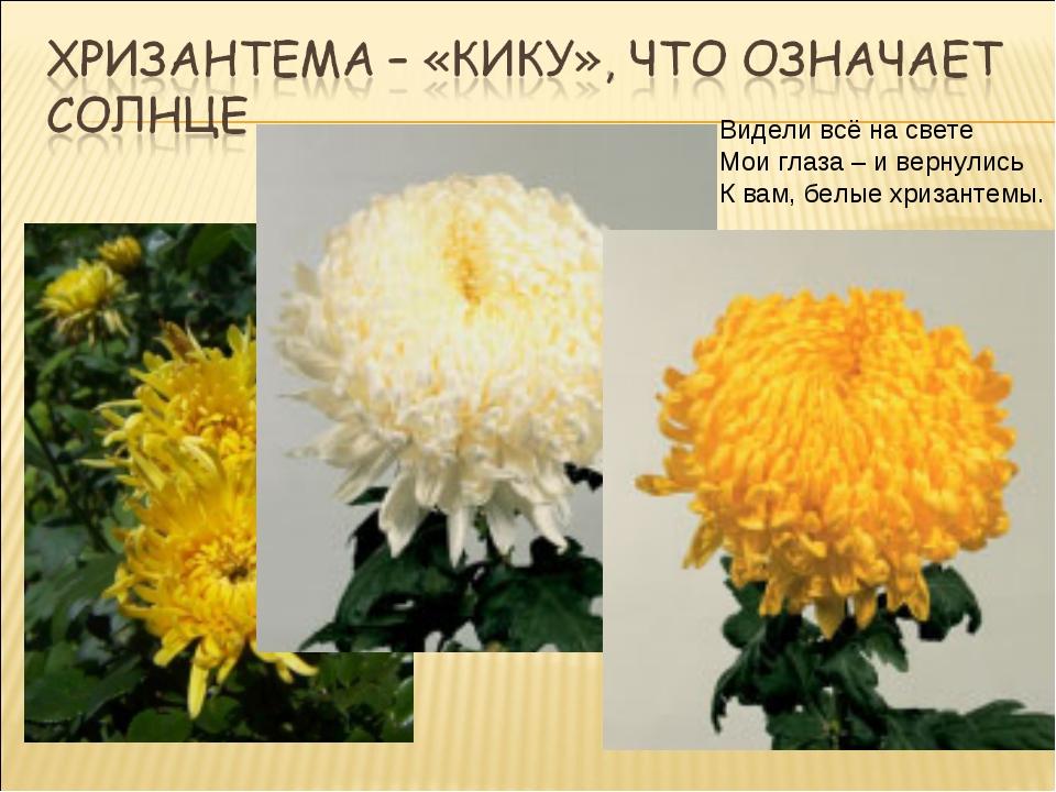Видели всё на свете Мои глаза – и вернулись К вам, белые хризантемы.