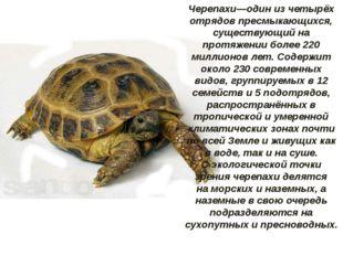 Черепахи—один из четырёх отрядовпресмыкающихся, существующий на протяжении б