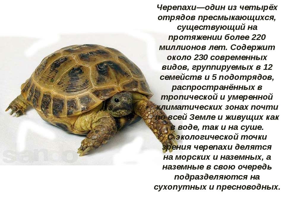 Черепахи—один из четырёх отрядовпресмыкающихся, существующий на протяжении б...