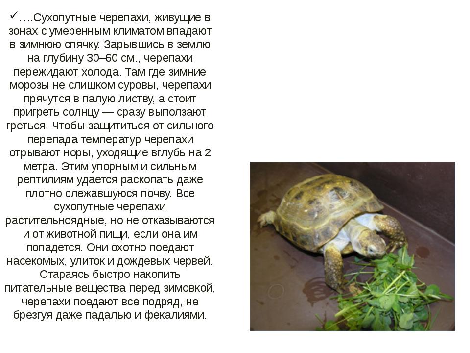 ….Сухопутные черепахи, живущие в зонах с умеренным климатом впадают в зимнюю...