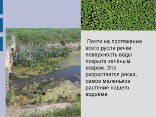 Почти на протяжении всего русла речки поверхность воды покрыта зелёным ковром