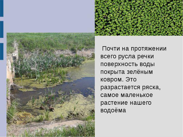 Почти на протяжении всего русла речки поверхность воды покрыта зелёным ковром...
