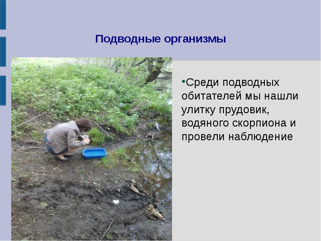 Среди подводных обитателей мы нашли улитку прудовик,   водяного скорпиона и п...
