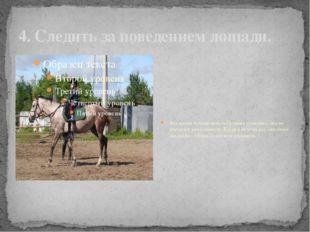 4. Следить за поведением лошади. Все время лошадь вела себя очень спокойно, о