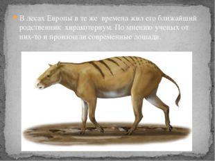 В лесах Европы в те жевремена жил его ближайший родственникхиракотериум.