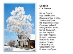 Береза С.А. Есенин Белая береза Под моим окном Принакрылась снегом, Точно сер
