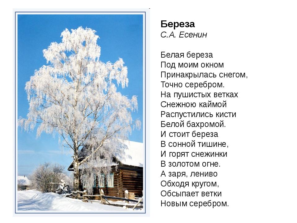 Береза С.А. Есенин Белая береза Под моим окном Принакрылась снегом, Точно сер...