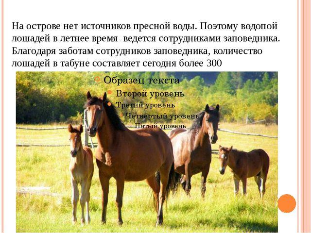 На острове нет источников пресной воды. Поэтому водопой лошадей в летнее врем...