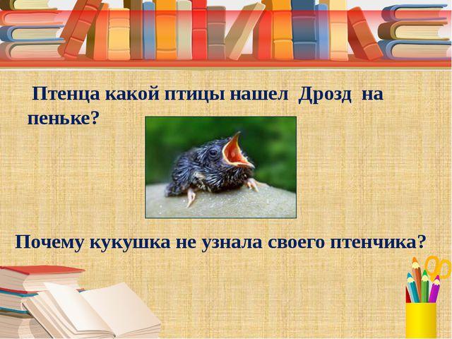 Птенца какой птицы нашел Дрозд на пеньке? Почему кукушка не узнала своего пт...