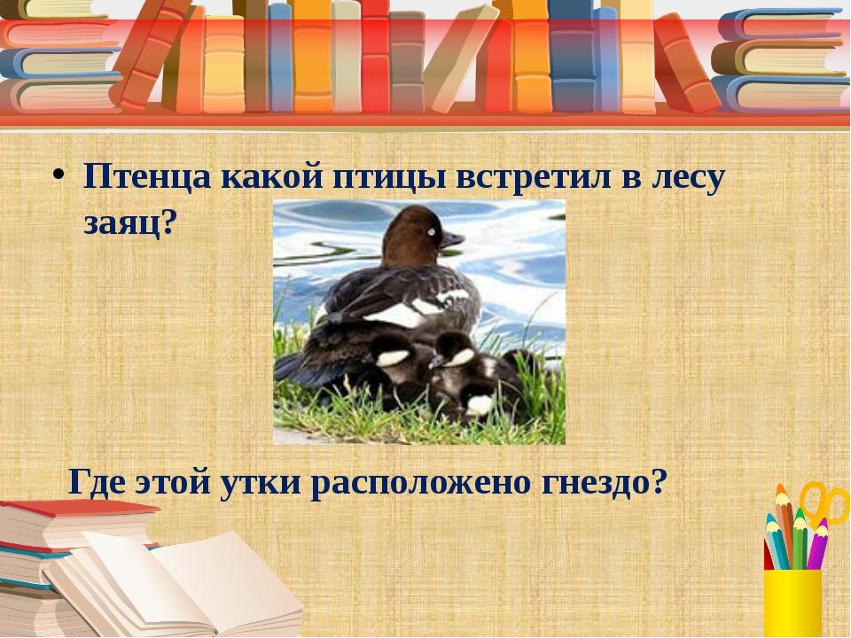 Птенца какой птицы встретил в лесу заяц? Где этой утки расположено гнездо?