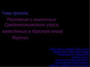МБОУ «СОШ г. Среднеколымска» Тема проекта: Растения и животные Среднеколымск