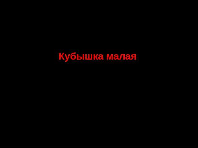 4. Семейство Кувшинковые Кубышка малая СТАТУС. III г категория. Редкий вид, с...
