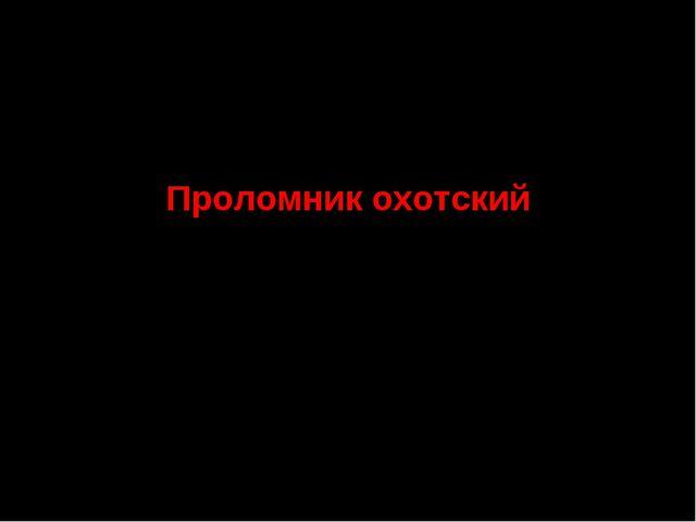6.Семейство Первоцветные Проломник охотский СТАТУС. III г категория. Редкий в...