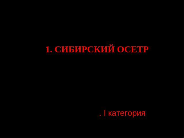 Раздел 2. Костные рыбы-2 1. СИБИРСКИЙ ОСЕТР Acipenser baerii Brandt, 1869 Отр...