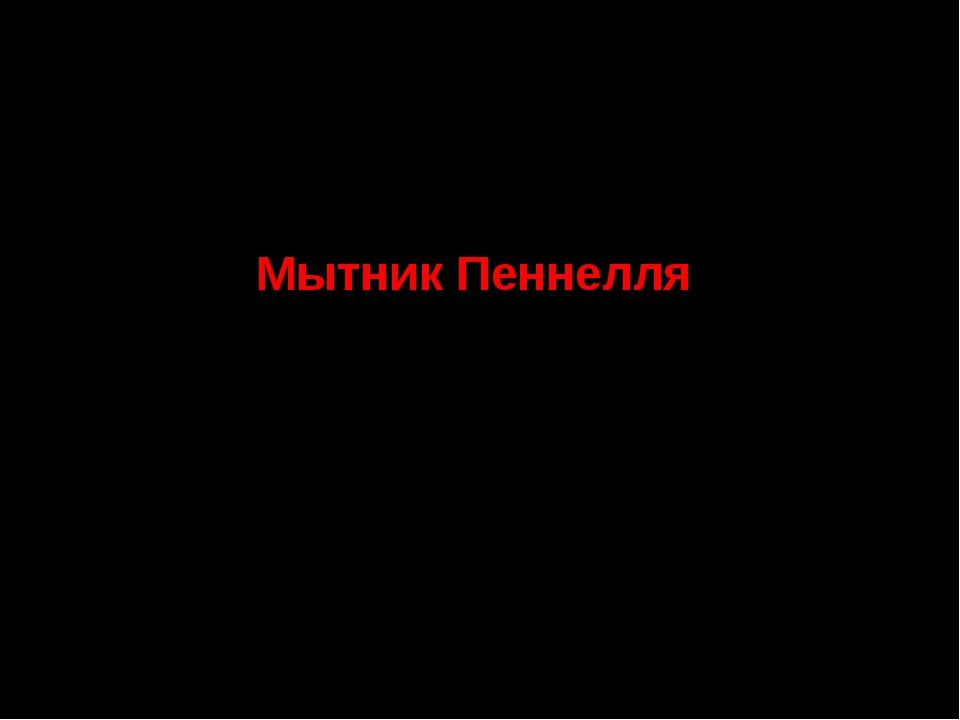 5. Семейство Норичниковые Мытник Пеннелля СТАТУС. III г категория. Редкий вид.