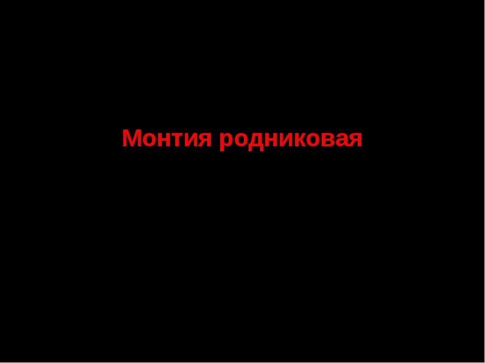 7. Семейство Портулаковые Монтия родниковая СТАТУС. III г категория. Редкий...
