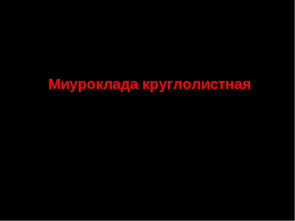 10. Семейство Брахитециевые Миуроклада круглолистная СТАТУС. III а категория....