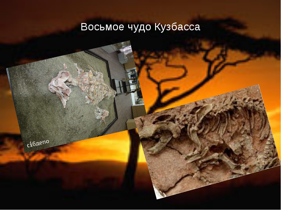 Восьмое чудо Кузбасса