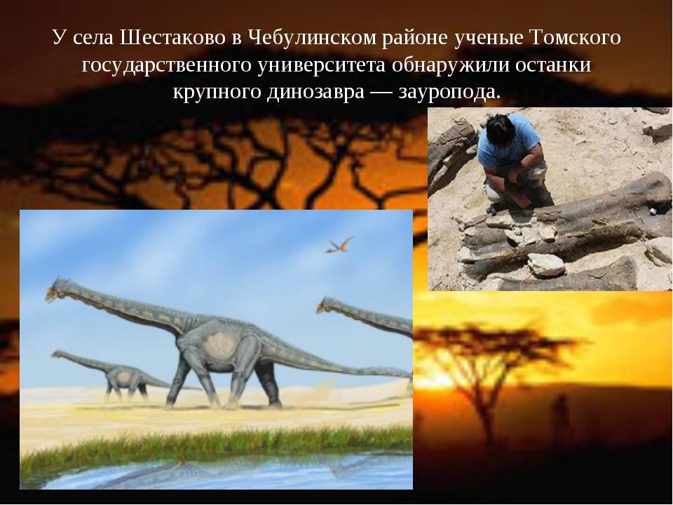 У села Шестаково в Чебулинском районе ученые Томского государственного универ...