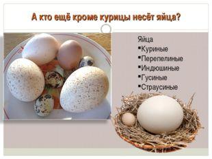 А кто ещё кроме курицы несёт яйца? Яйца Куриные Перепелиные Индюшиные Гусиные