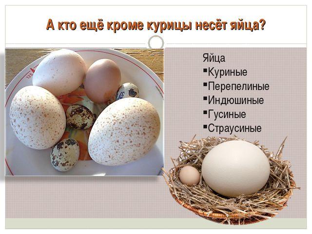 А кто ещё кроме курицы несёт яйца? Яйца Куриные Перепелиные Индюшиные Гусиные...