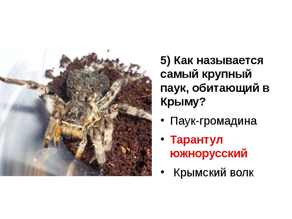 5) Как называется самый крупный паук, обитающий в Крыму? Паук-громадина Таран...