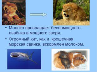 Молоко превращает беспомощного львёнка в мощного зверя. Огромный кит, как и к