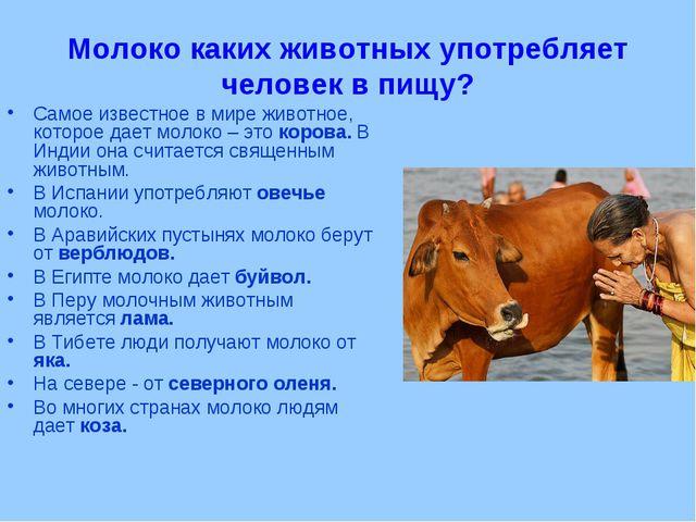 Молоко каких животных употребляет человек в пищу? Самое известное в мире живо...