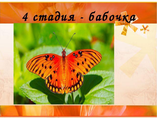 4 стадия - бабочка