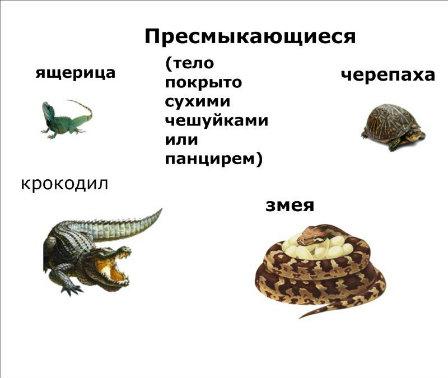 http://s019.radikal.ru/i617/1204/c3/921807efa3d1.jpg