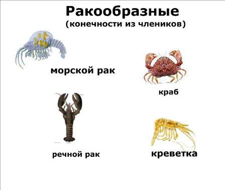 http://s019.radikal.ru/i610/1204/45/820a122e1805.jpg