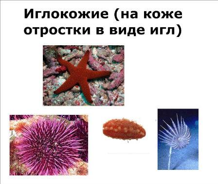 http://s017.radikal.ru/i435/1204/35/ae7675f431c7.jpg