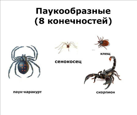 http://s018.radikal.ru/i500/1204/07/50ae6f25b8d9.jpg