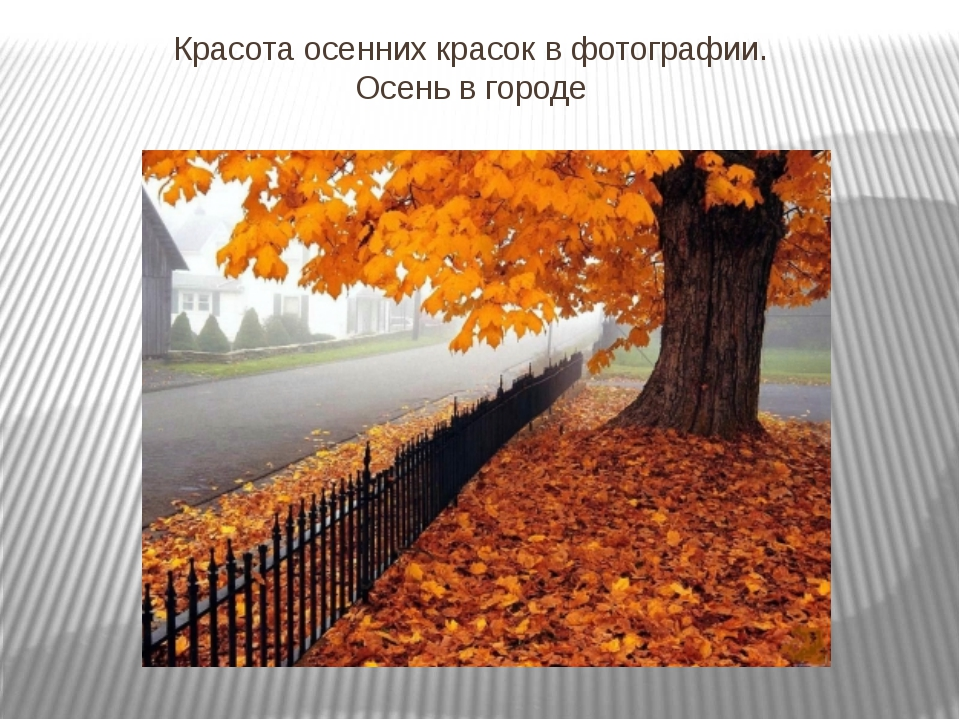 Красота осенних красок в фотографии. Осень в городе