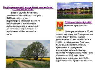 «Сумароковский». Вблизи города Костромы находится заповедник(Площадь 3617тыс