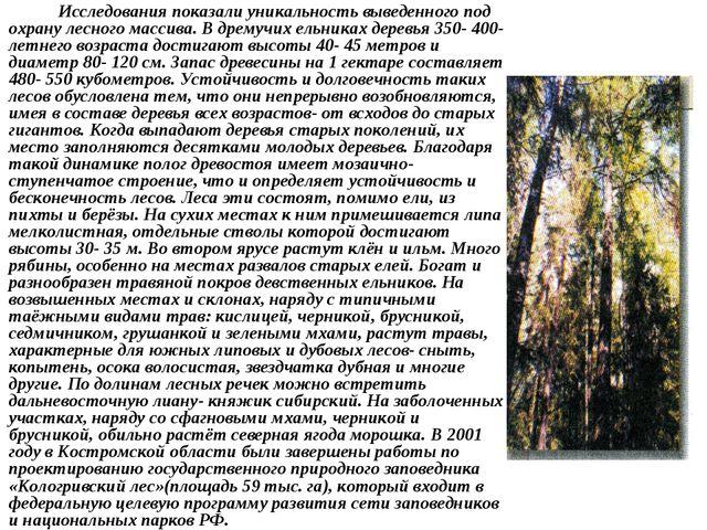 Исследования показали уникальность выведенного под охрану лесного массива. В...