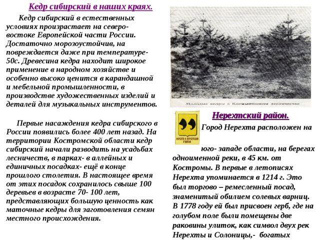Кедр сибирский в наших краях. Кедр сибирский в естественных условиях произра...