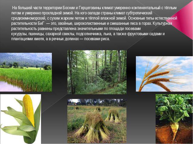 На большей части территории Боснии и Герцеговины климат умеренно-континентал...