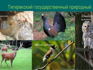 Тигирекский государственный природный заповедник Тетерев Длиннохвостая неясыт