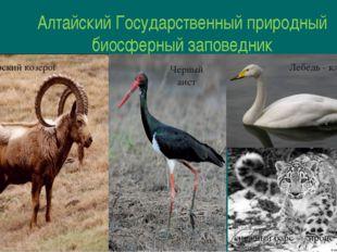 Алтайский Государственный природный биосферный заповедник Сибирский козерог Ч