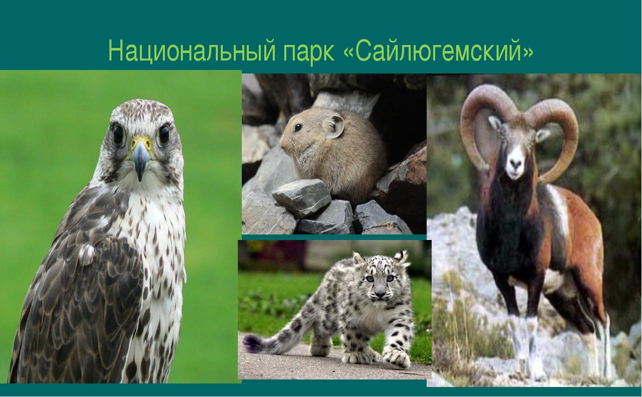 Национальный парк «Сайлюгемский»
